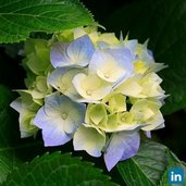 Spotlight_open-uri20150305-6005-1uvoh2l