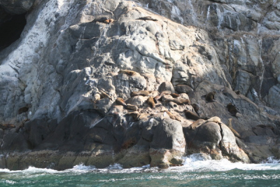 Sea Lions out at the island