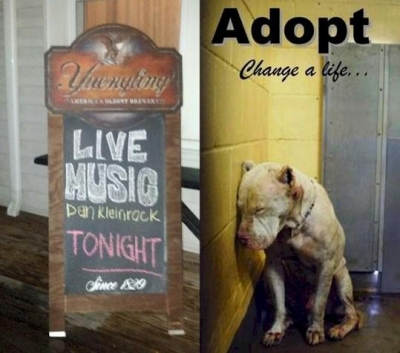 Donate - Sponsor - Volunteer - Rescue - Foster - Adopt