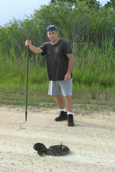 Eastern Diamondback rattlesnake at Big Cypress National Preserve July 2017