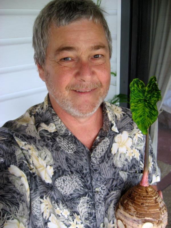 Spring, 2013, on the serious side, holding a corm of Taro (Okinawan Taro, aka Dasheen, Araimo, Kalo Potato). The leave was variegated on this specimen, unusual.
