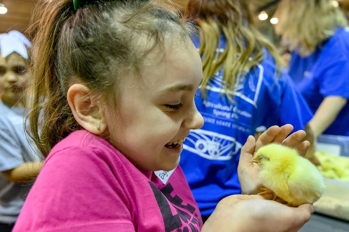 Baby chicks steal the show at MTSU  Ag Education Spring Fling for elementary students