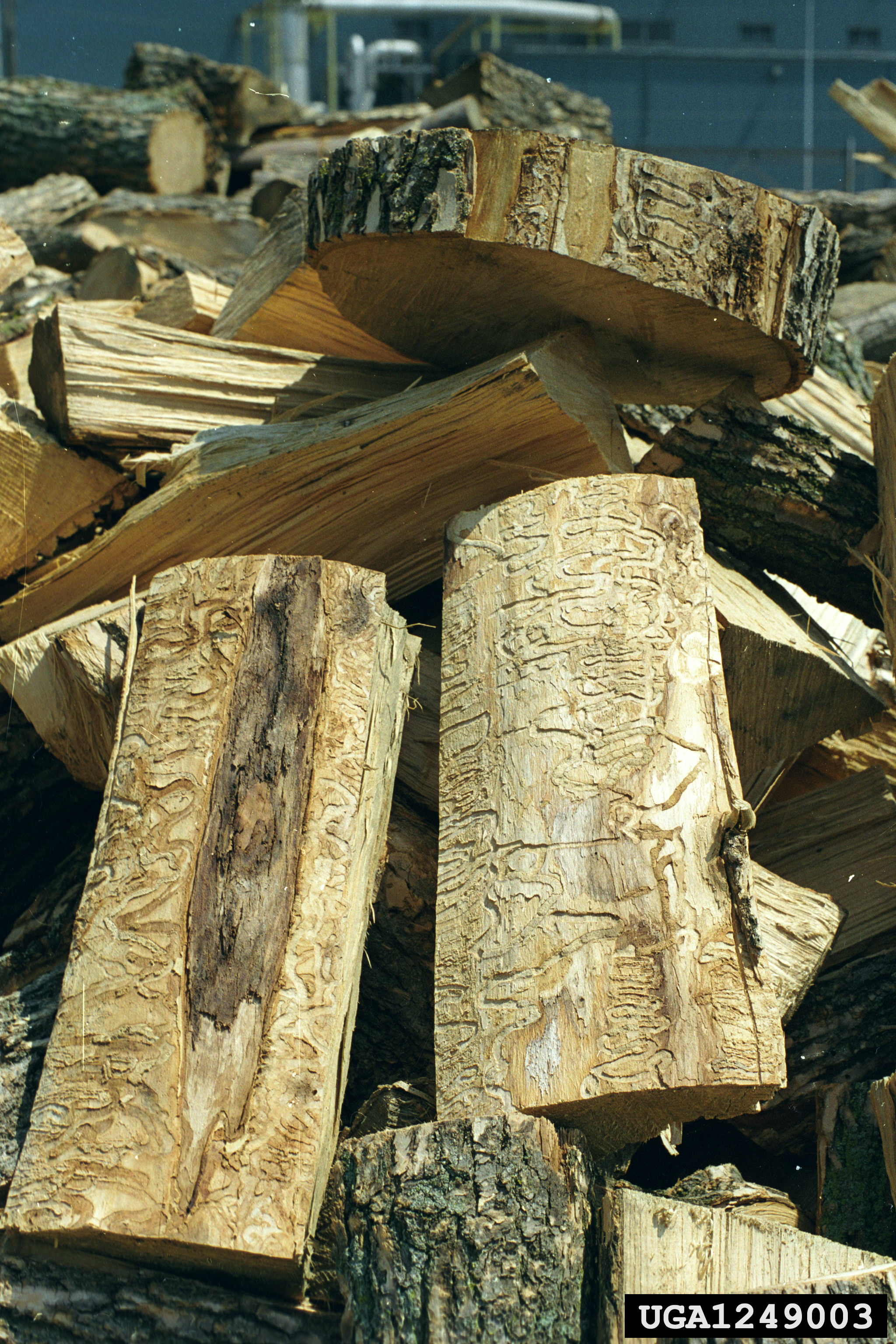 June 1 Only Certain Types Of Firewood Allowed In Tn State