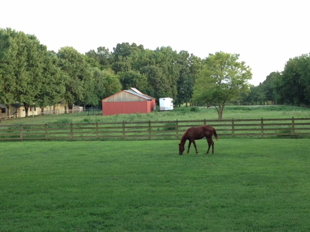 Potomac horse fever has been confirmed in Tennessee