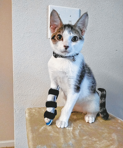 With a special new device, Jabber can take life in stride. COURTESY PALMETTO ANIMAL LEAGUE