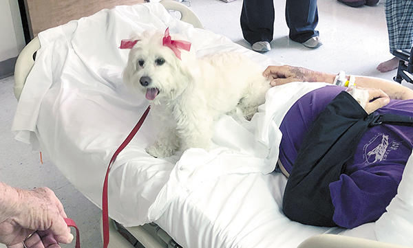 Saint Francis Volunteer Program Adds Pet Therapy Dog
