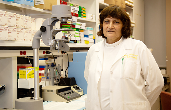 UAMS Researchers Publish Studies to Prevent Heart Damage from Chemo