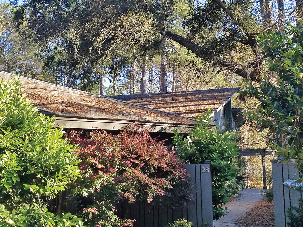 This live oak over the roof of the author's home provides shade year-round. JOHN RIOLO