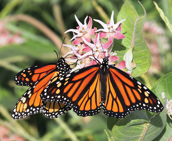 Landscaping with native plants offers many benefits