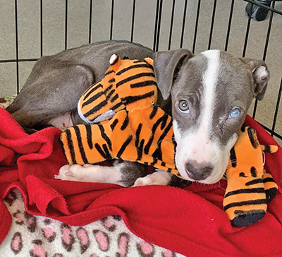 Rick's story is one of love, compassion and survival against the odds. COURTESY PALMETTO ANIMAL LEAGUE