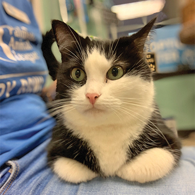 Meranda has lived at the Palmetto Animal League Adoption Center for more than four years. COURTESY PALMETTO ANIMAL LEAGUE