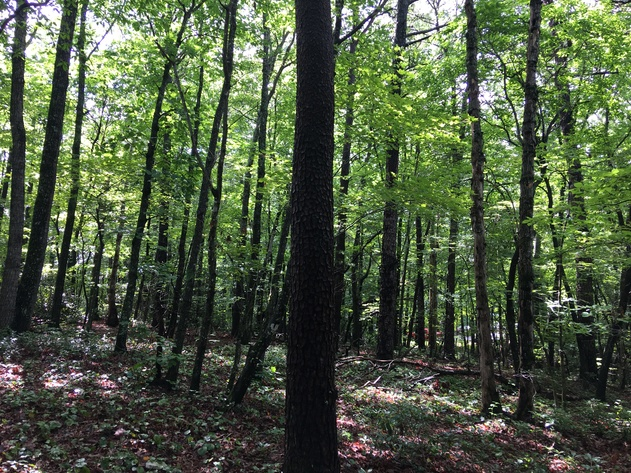 30+/- Acres In The Foothills of Surry County, NC - Online Only