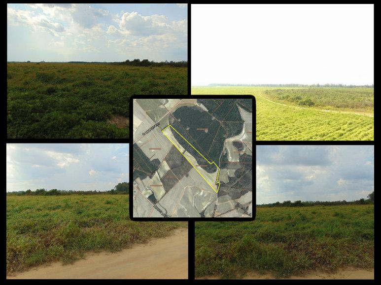 118+/- Acres in Marlboro County, SC