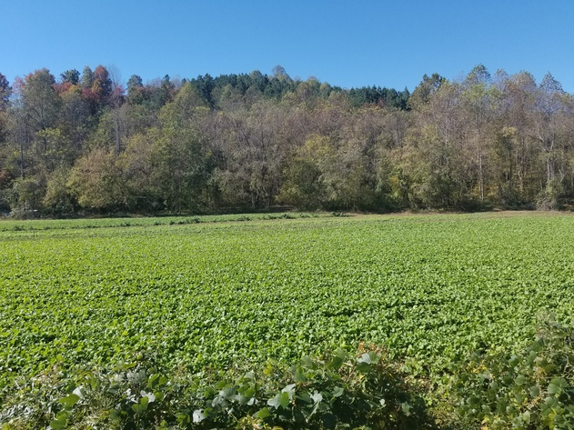 Multi Land Auction in NC and VA