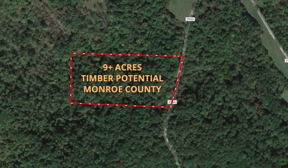 9+ Acre Recreational Lot in Monroe Co --  ONLINE ONLY BIDDING!!!