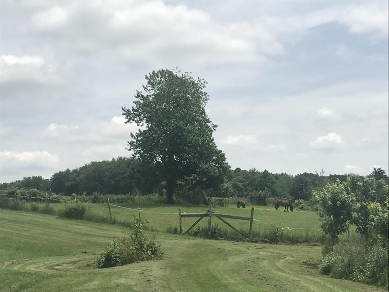 HILLSDALE MINI FARM AUCTION