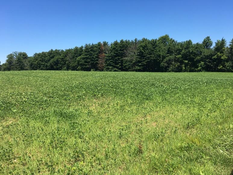Northwestern Wayne County Land Auction
