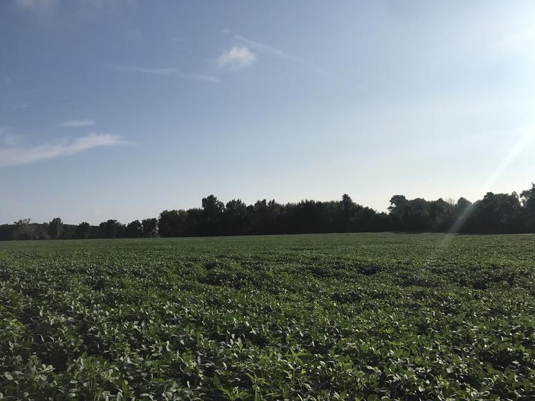 163 Acre Huron County Farmland Auction