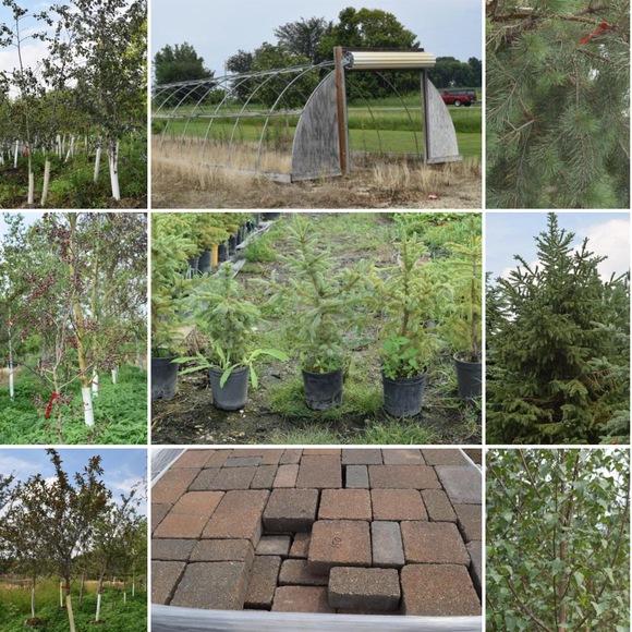 Labor Day Tree Auction | Bid-2-Buy.com | Bid-2-Buy.com