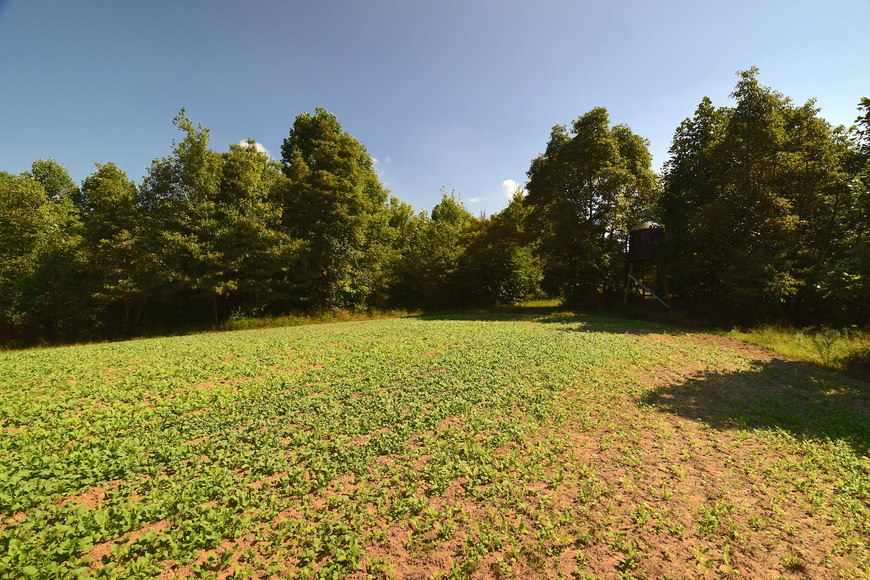 275 ACRE LICKING COUNTY AUCTION