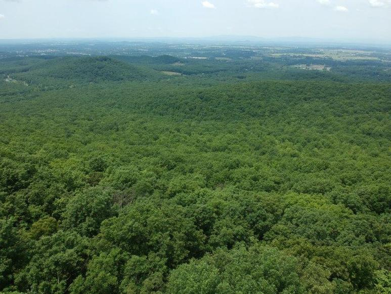 383 Wooded Acres