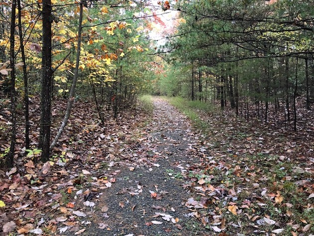 69.81 +/- Acres with Conservation Easement - ONLINE ONLY
