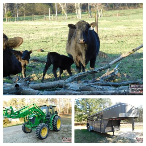 Cattle and JD 6140D Tractor and Equipment Near Ellerbe, NC