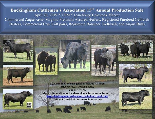 Buckingham Cattlemen's Association 15th Annual Production