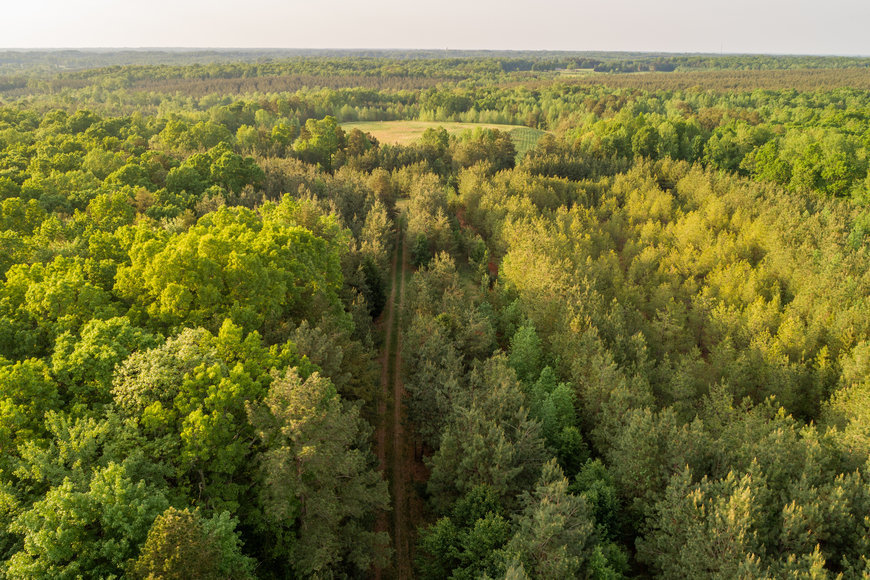 49.7 +/- Acres of Timber Land in Lunenburg County, VA--Selling to the Highest Bidder!!