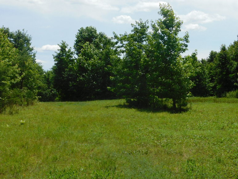 Featured Image for 140 +/- Wooded Acres in Caroline County, VA...a Sportsman's Dream!!  ONLINE ONLY BIDDING!!