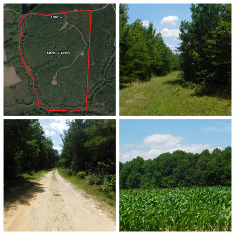 140 +/- Wooded Acres in Caroline County, VA...a Sportsman's Dream!!  ONLINE ONLY BIDDING!!