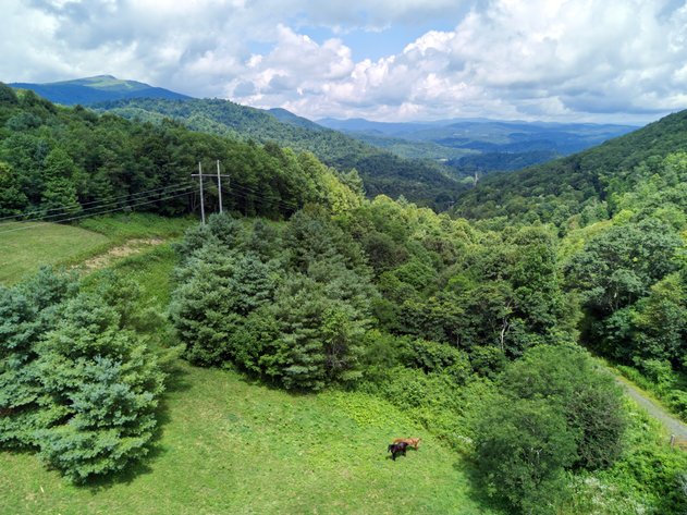 Premier Land Auction - 82 ± Acres in Avery County, NC