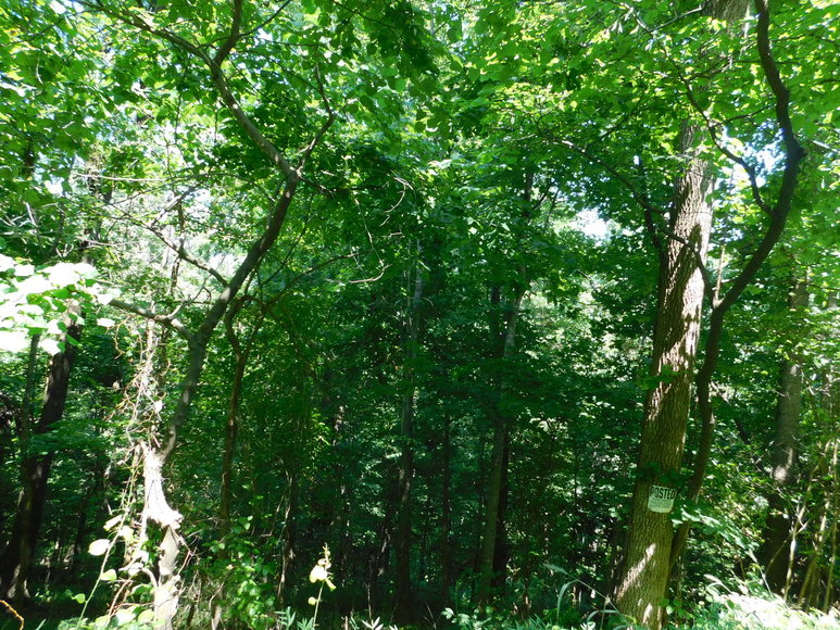 14.9 +/- Acres of Buildable Land in Madison County, VA