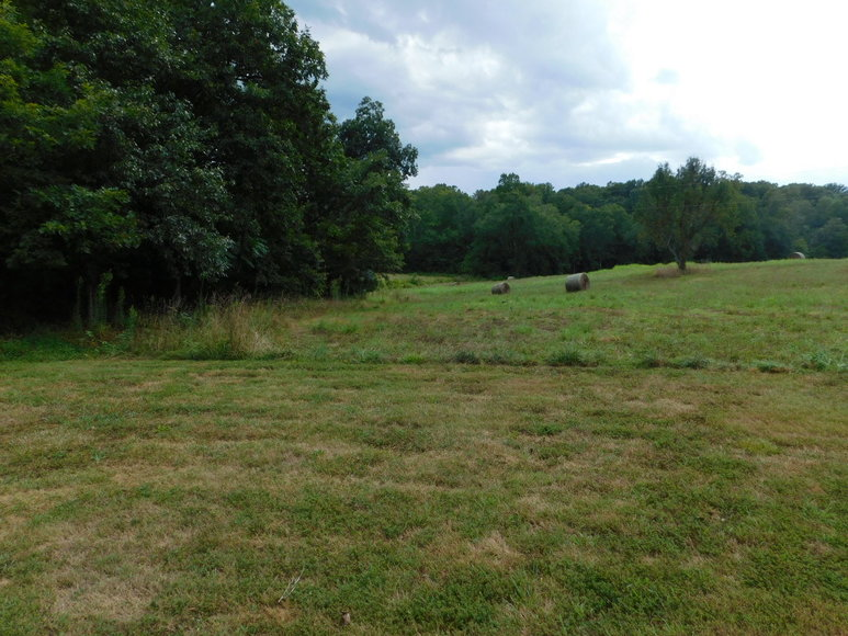 9.8 +/- Acres of Undeveloped Land in Madison County, VA