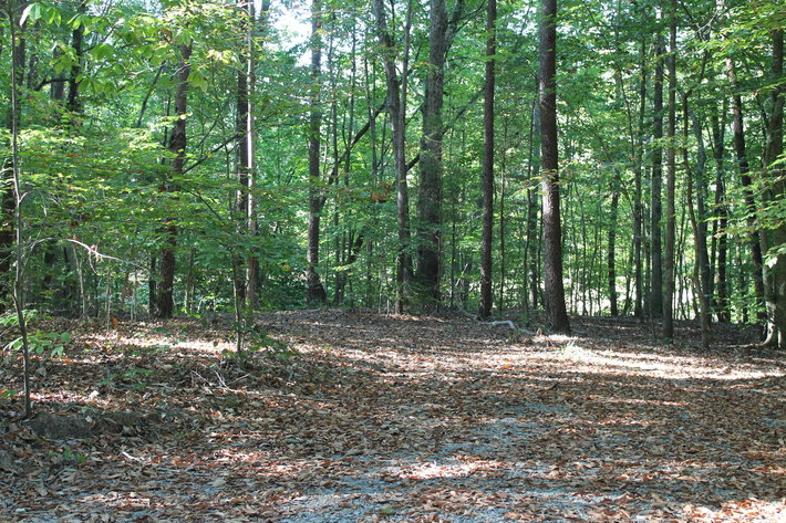11.15± Acres on Old Hollow Road, Mount Airy, NC