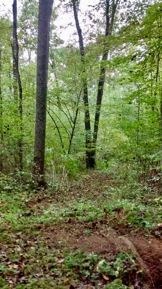 6.1 +/- Acre Building Lot w/4 BR Perk Site in Madison County, VA--SELLS to the HIGHEST BIDDER via ONLINE ONLY BIDDING!!