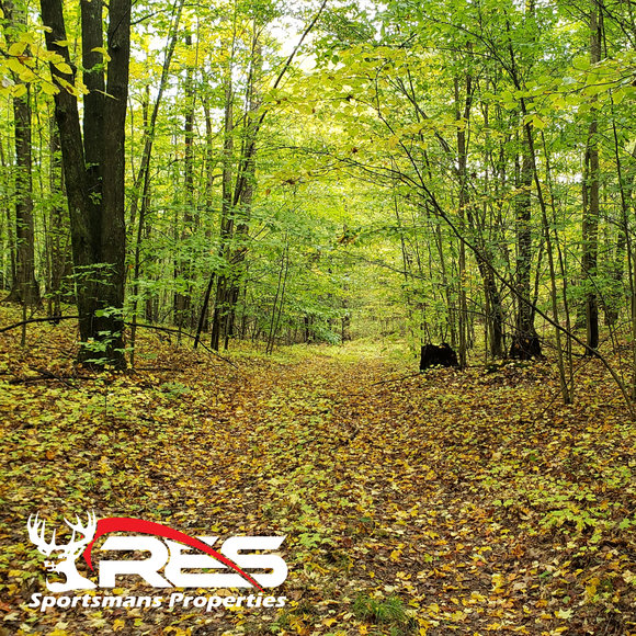 ABSOLUTE 80 ACRE WOODED HUNTING PROPERTY AUCTION