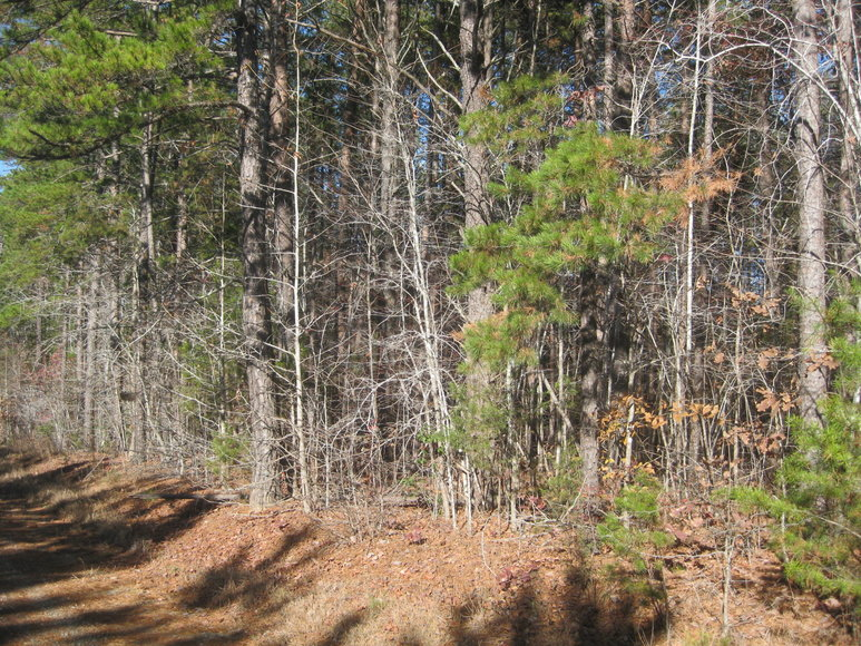 30 +/- Acre Timber Tract in Lunenburg County, VA--ONLINE ONLY BIDDING!!