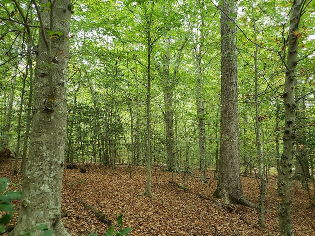 92 Wooded Acres with Stream