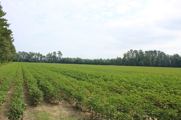 5 Farms in Suffolk VA Tracts from 68 to 86 Acres