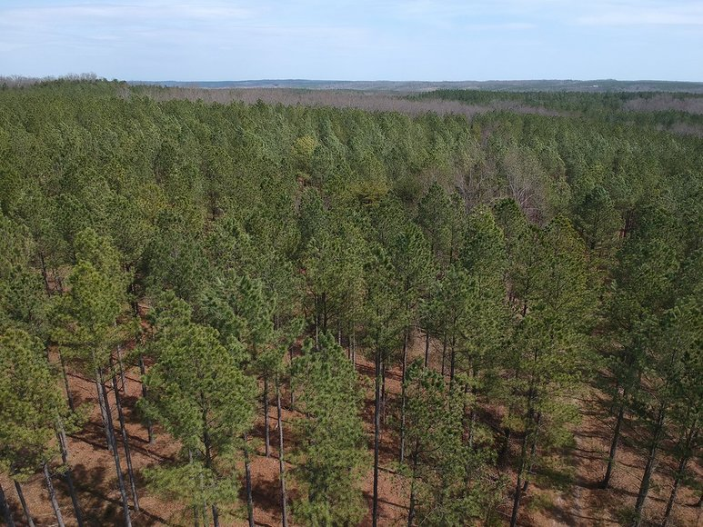 1238 Acres offered in 18 Tracts Prime Timber Tracts, Farm Tracts, & Residential Riverfront Tracts