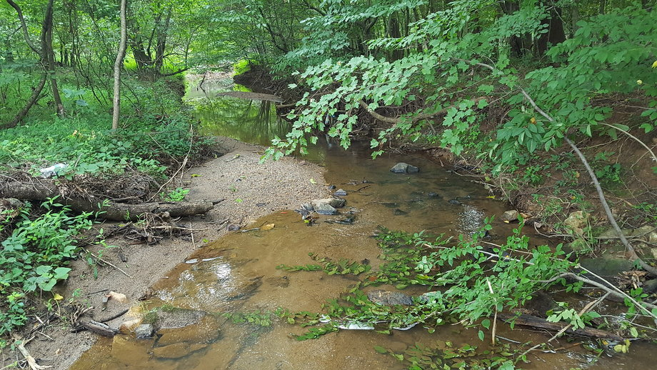 48 Wooded Acres with Stream