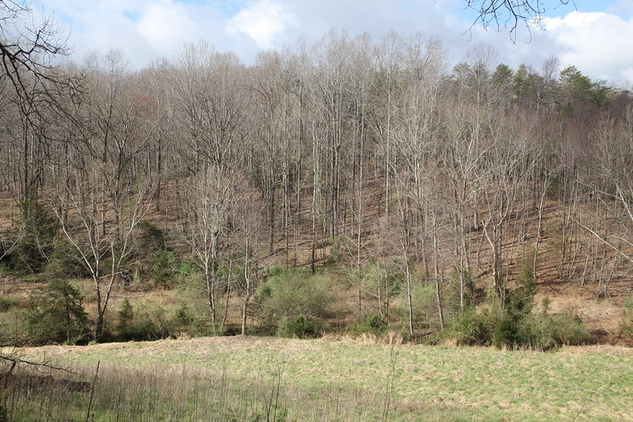 141 Acres in Nelson County w/ Woodlands, Fields, Streams, and Views