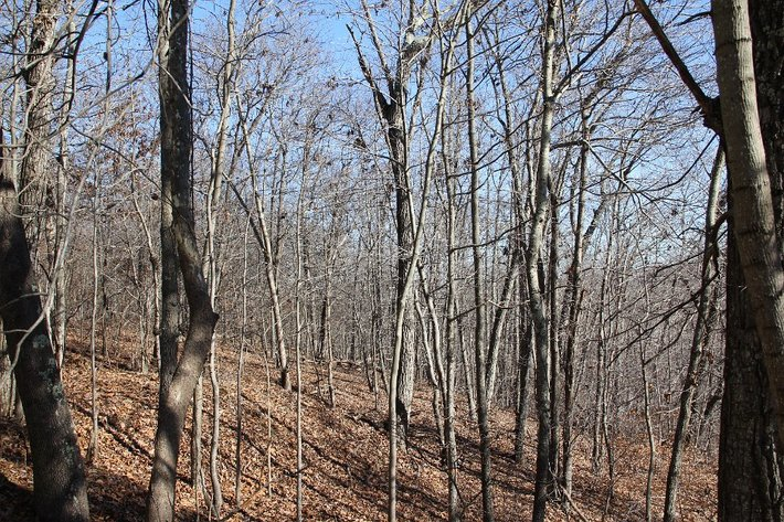 413+/- Wooded Acres on Mt Athos
