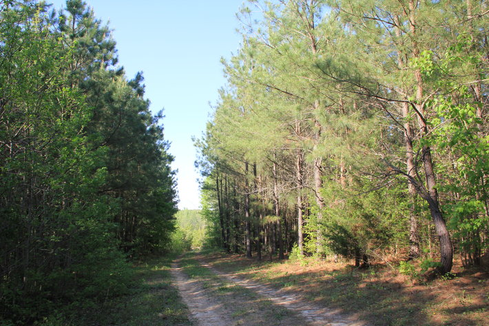 177 Acres of Professionally Managed Timber