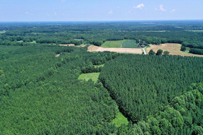 99 Acres of Timberland in Lunenburg County, VA