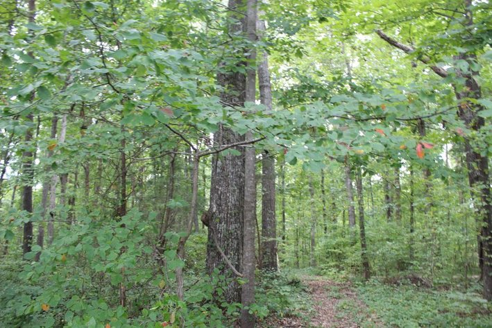 8.8 +/- Acres - Guilford County, NC