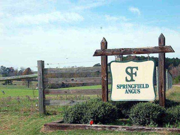 Springfield Angus Bull Sale