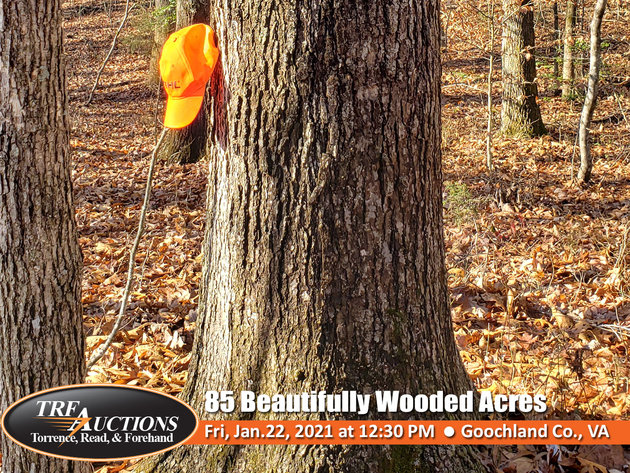 85 Beautifully Wooded Acres in Goochland County