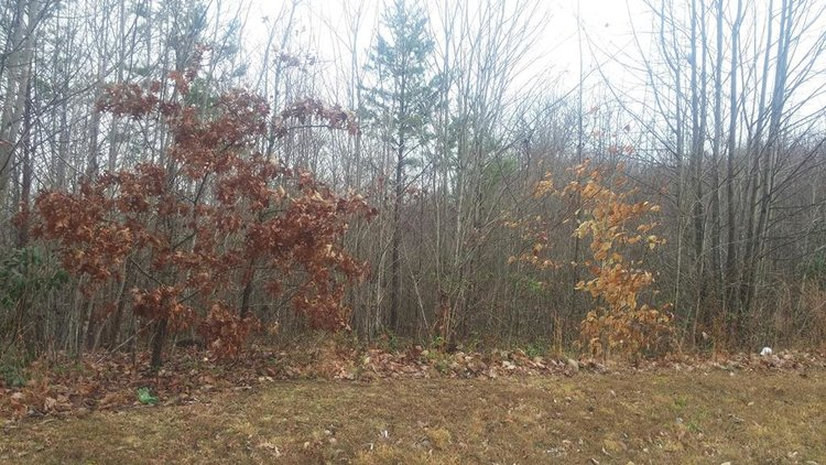 237 Athey Simmons Road - Land For Sale in Mount Airy